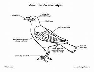 Myna Bird Labeling Page