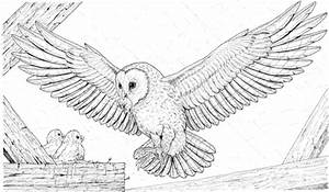 Number Names Worksheets » Pictures Of Owls To Colour ...