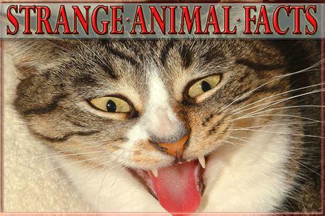 25 Strange Animal Facts   HubPages