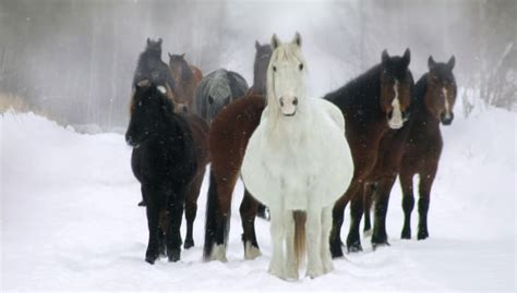 Ontario EHV-1 Equine Abortions Reported - Business ...