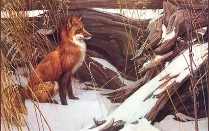Fox Robert Bateman Puzzle Wallpapers Wily Hill