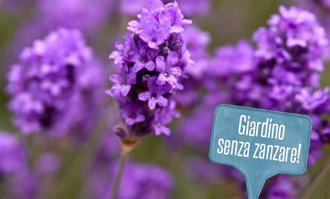 antizanzare giardino giardino anti zanzare 5 piante per tenere lontane le