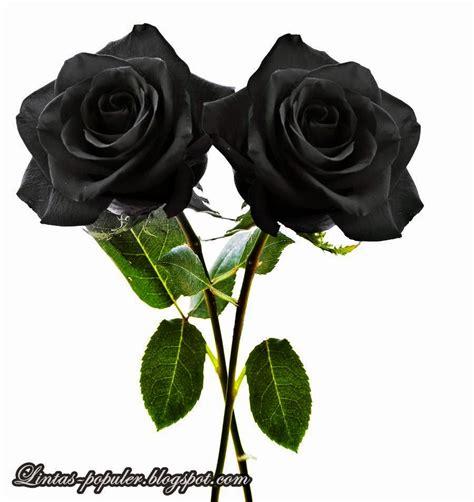 Gambar Bunga Mawar Bergerak Gambar C