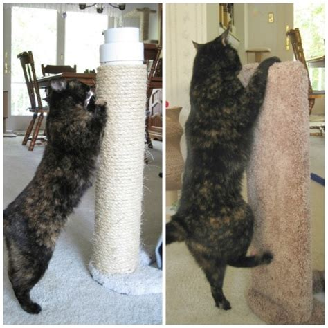 cat clawing furniture review furniture protector cat scratcher by kool kitty 2015
