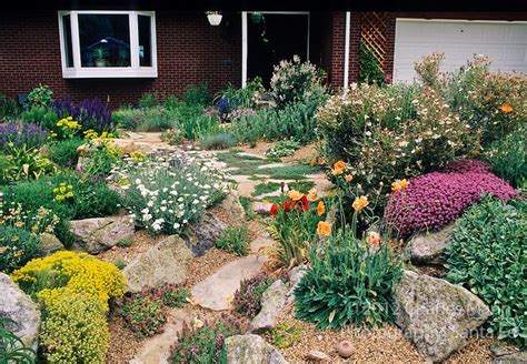 xeriscape garden plants a beautiful xeriscape garden by john smithin golde colorado features poppies apache plume