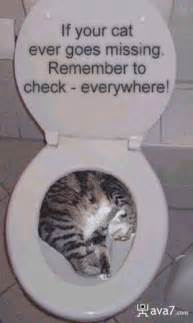 cats using the toilet ava7 stuff toilet pictures