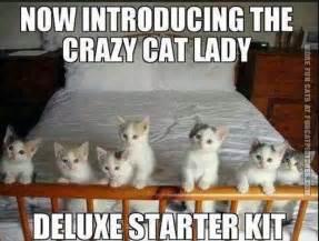 cat starter kit cat meme www imgkid the image kid has it