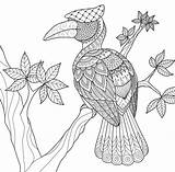 Coloring Hornbill Tree Bird Zentangle Paradise Tropical Drawing Decorations Adult Cute Vector Drawings Getdrawings 33kb 1300 sketch template