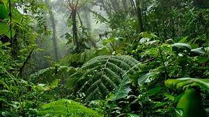 forest-costa rica | The Costa Rica News