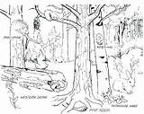 Coloring Bamboo Forest Rainforest Pages Trees Tiger Asian Getcolorings Printable Getdrawings Enchanting Colorings sketch template