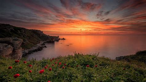 sea coast meadow  green grass  red poppies red