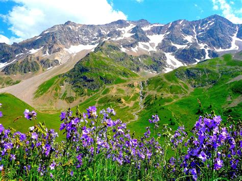 nature landscape mountain purple flowers wallpaper hd