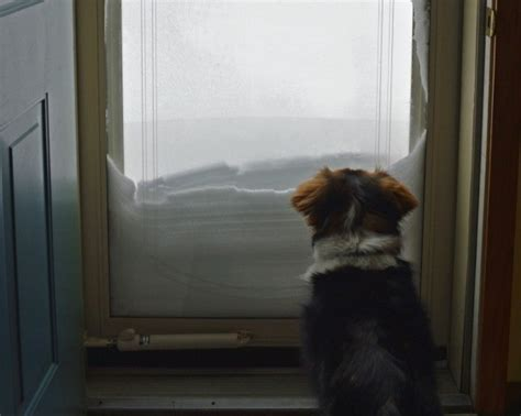 dog wont    bathroom   bad weather thriftyfun