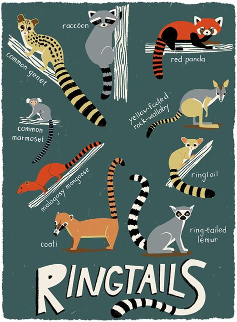 images  mammals  pinterest madagascar