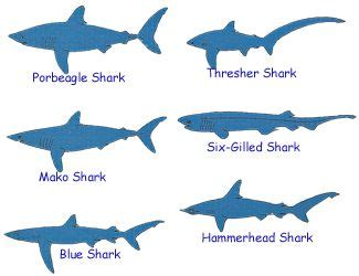type  sharks  pictures type  sharks pinterest