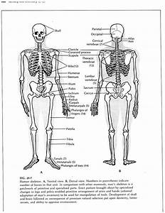 Body Bone Diagram