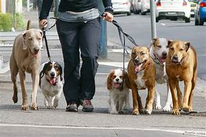 What is a dog walker warrington dogs for Puppy dog walker