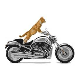 cat on motorcycle photography 852 photos from the streets of hong kong