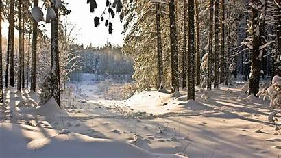 Winter Forest Wallpapers Hq Backgrounds