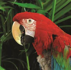 Top 10 facts about the Amazon Rainforest | The Inside ...