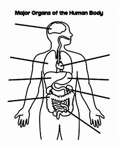 Body Systems Coloring Pages At Getcolorings Com