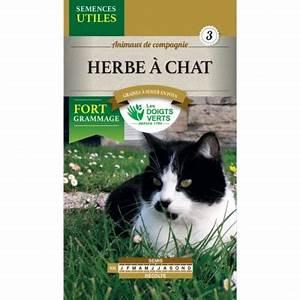 Graine Herbe A Chat : graines herbes chats les doigts verts ck jardin maison ~ Melissatoandfro.com Idées de Décoration