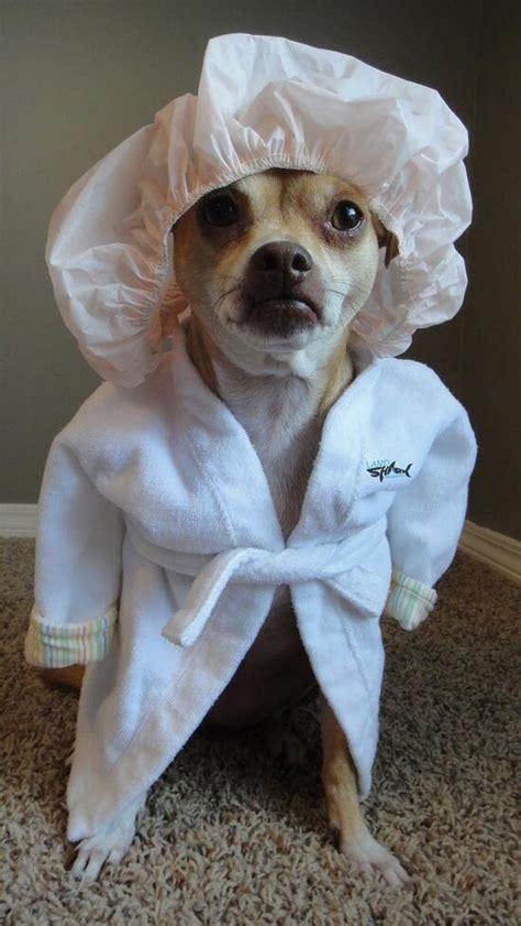 dog  shower cap bathrobe luvbat