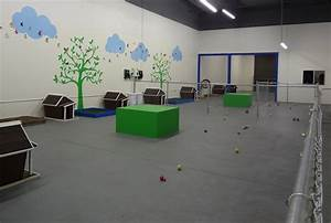 the dog house doggie daycare freeplay dogs daycare With the dog house daycare