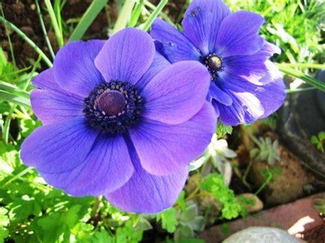 fiori da giardino perenni foto fiori da balcone perenni con piante da fioriera e piante