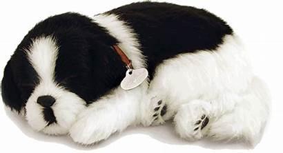 Petzzz Perfect Border Collie Husky