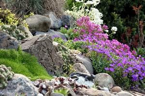 Steine Für Steingarten : wie man einen steingarten anlegt das gartenmagazin ~ Lizthompson.info Haus und Dekorationen