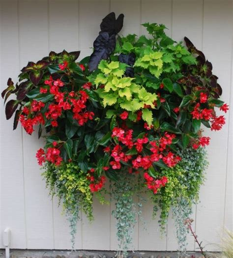 shade flowers for pots 1699 best garden container gardening images on pinterest