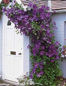 Treillage Plante Grimpante : fleurs grimpantes sur treillis ~ Dode.kayakingforconservation.com Idées de Décoration