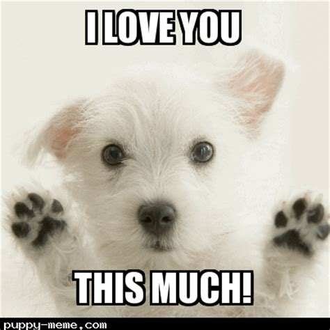 Much Dog Meme - image gallery i love you puppy