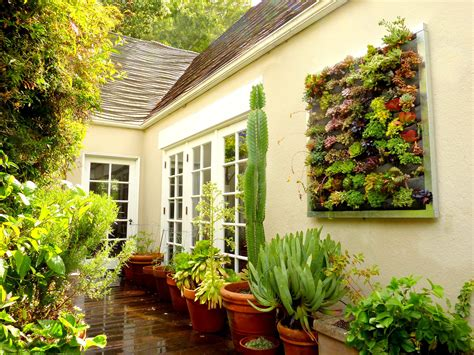 plants  walls vertical garden systems succulent