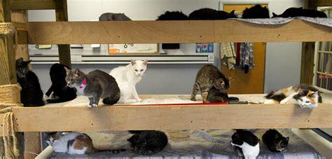 closer   animal hoarding  victims aspca