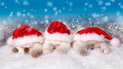 santa claus kitten hd wallpaper wallpaper studio