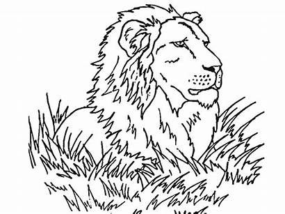 Lion Coloring Face Pages Printable