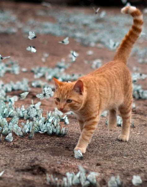 Lepa And The Blue Butterflies  Life With Cats