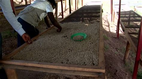 Top coffee plantation tour in da lat, vietnam. Rwanda Coffee - YouTube