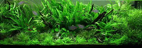 Aquascape Plant by The Jungle Style Aquarium Aquascaping
