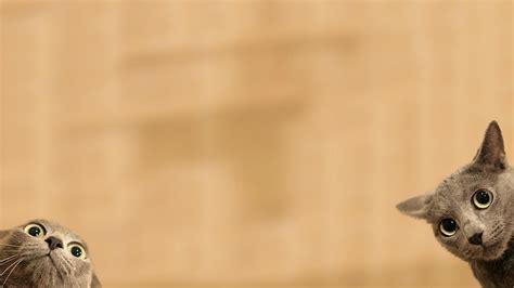 Cookie Monster Desktop Wallpaper Hd Funny Wallpapers 1080p Wallpapersafari