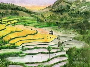 Ricefield Terrace II Painting by Melly Terpening