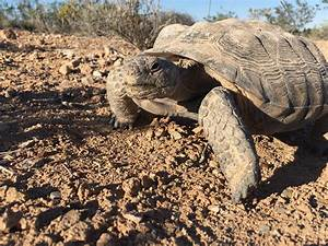Mojave Max Emerged  March 30  2019 At 1 28 Pm  U2013 Ccdcp