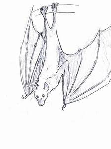 Drawings Of Fruit Bats - Cliparts.co