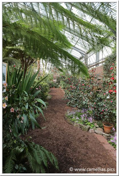 Botanischer Garten Leverkusen Camellias Pics