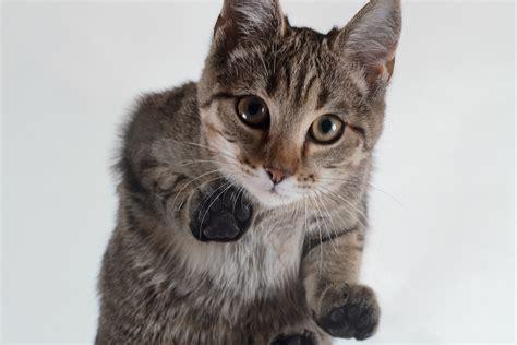 magen darm beschwerden bei katzen lieblingstier