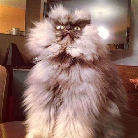 dlisted colonel meow