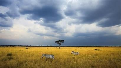Kenya Africa Spotlight Windows Zebra Safari Sky