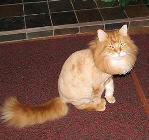 These 16 Cats Are Not Impressed With Their Haircuts